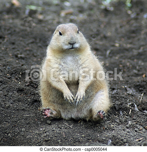 Prairie Dog - csp0005044