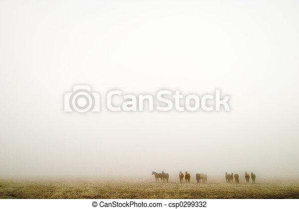 Prairie Fog - csp0299332