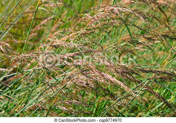 Prairie Grass Background - csp9774970