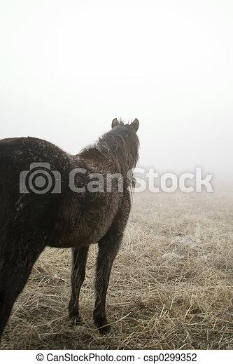 Prairie Horse - csp0299352