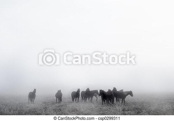 Prairie Horses - csp0299311