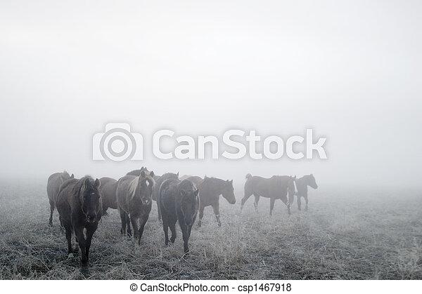 Prairie Horses - csp1467918