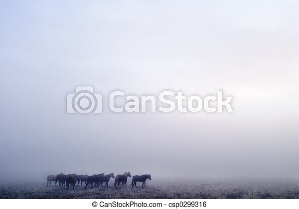 Prairie Horses - csp0299316