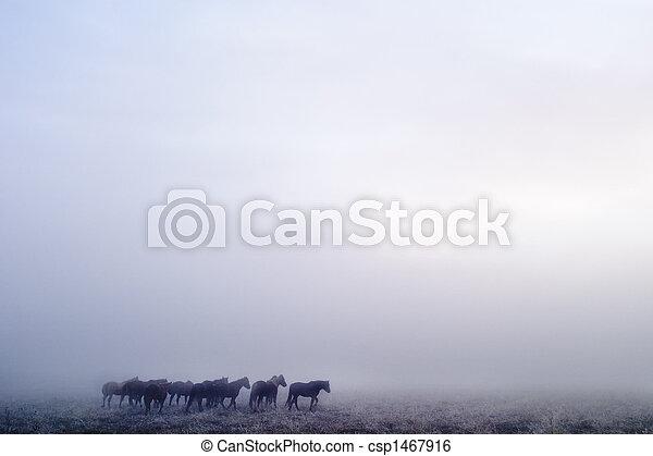 Prairie Horses - csp1467916