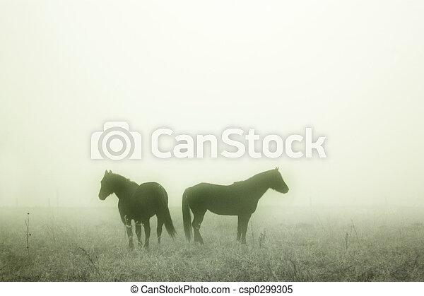 Prairie Horses - csp0299305