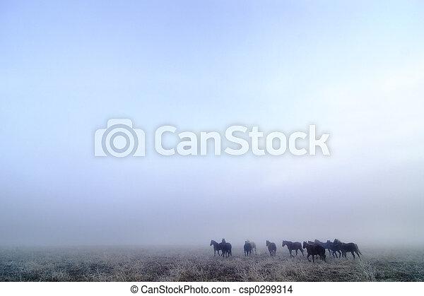 Prairie Horses - csp0299314
