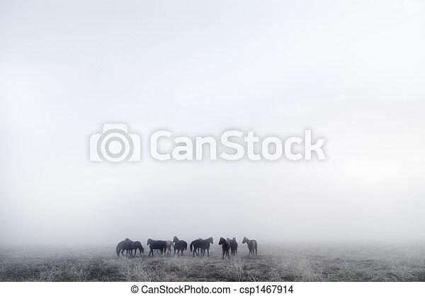 Prairie Horses - csp1467914