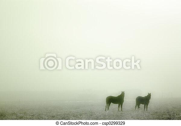 Prairie Horses - csp0299329