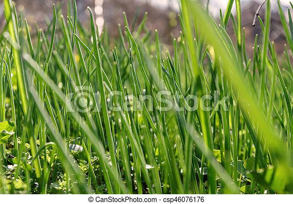 Carta Da Parati Prato.Prato Carta Da Parati Struttura Sfondo Verde Erba Closeup