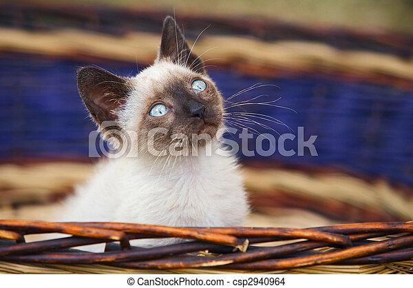 Precious little cat in a basket - csp2940964