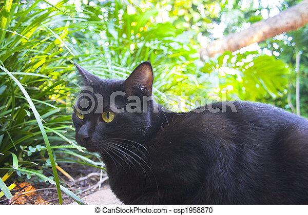 Predator cat - csp1958870