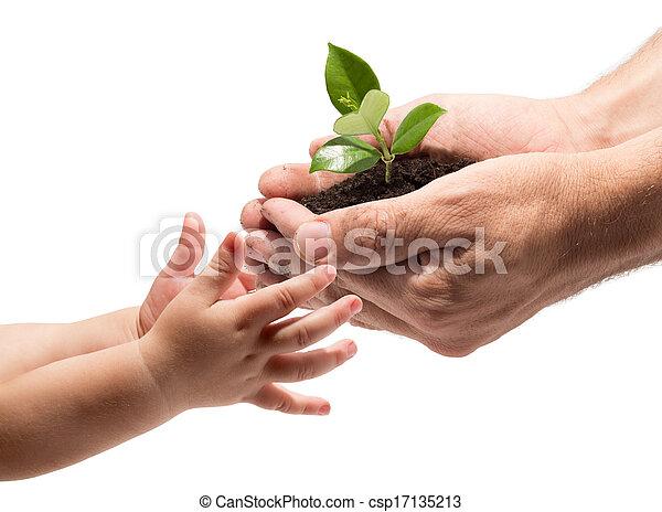 prendre, mains, enfant, plante - csp17135213