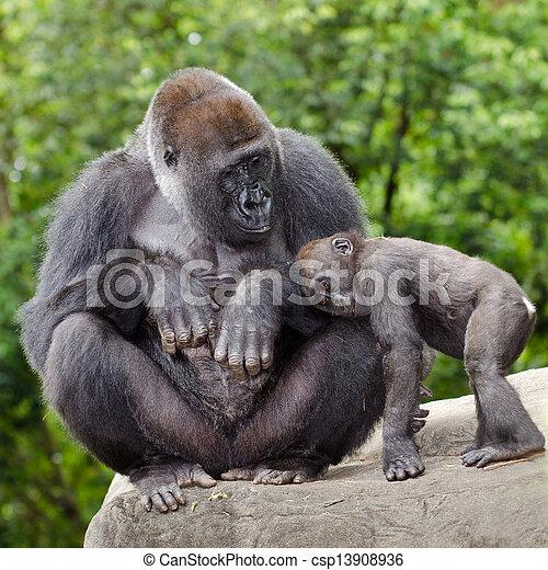 preoccupare, gorilla, giovane, femmina - csp13908936