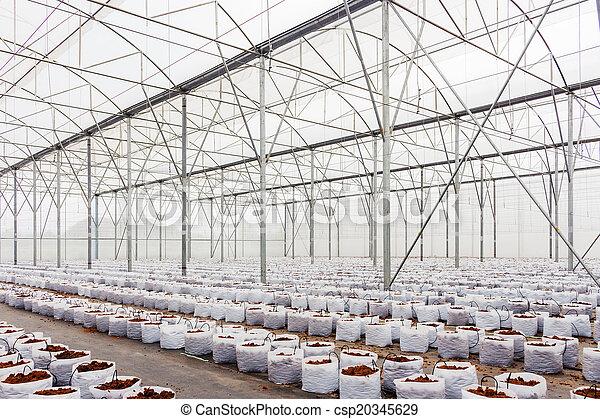 Preparación de cacao en invernadero para cultivo vegetal - csp20345629