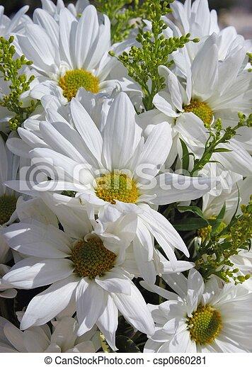 Pretty daises - csp0660281