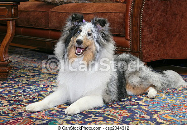 pretty dog in living room - csp2044312