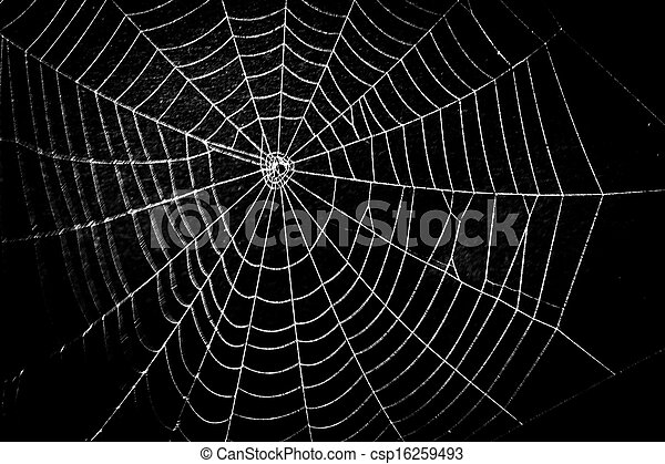 pretty scary frightening spider web for halloween - csp16259493