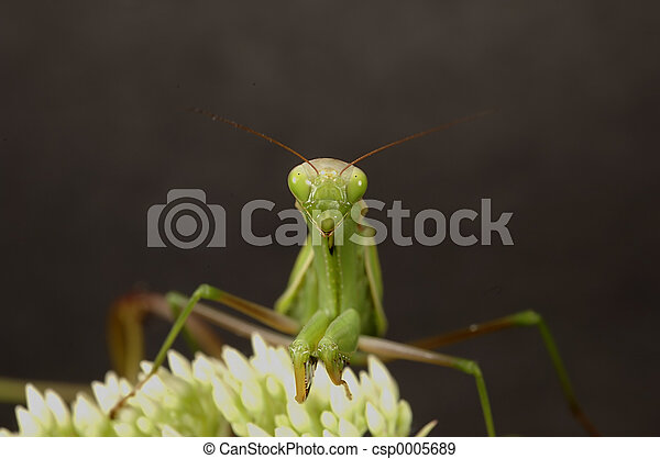 Preying Mantis 2 - csp0005689