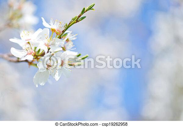 primavera, árbol - csp19262958