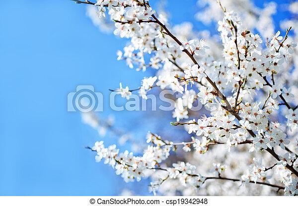 primavera, árbol - csp19342948