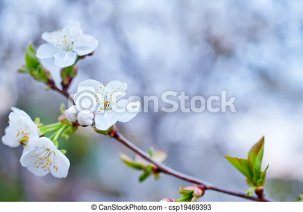 Árbol de primavera - csp19469393