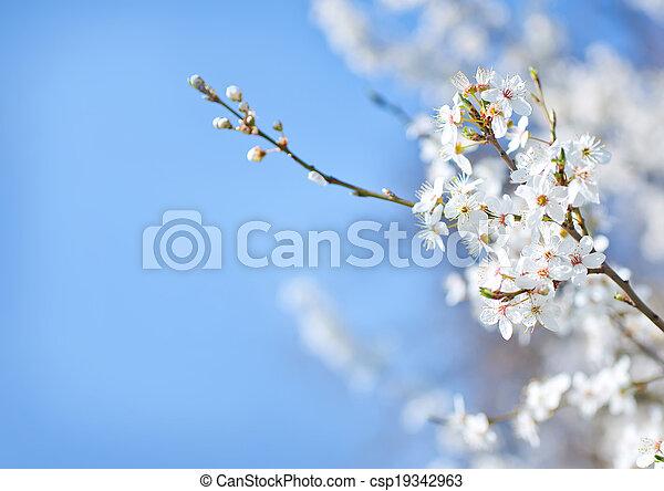 primavera, árbol - csp19342963