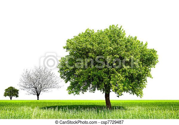 Árbol de primavera - csp7729487