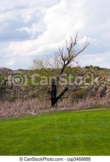 Árbol de primavera - csp3469888