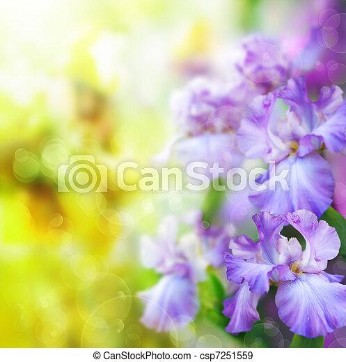 primavera, abstratos, flor, fundo - csp7251559