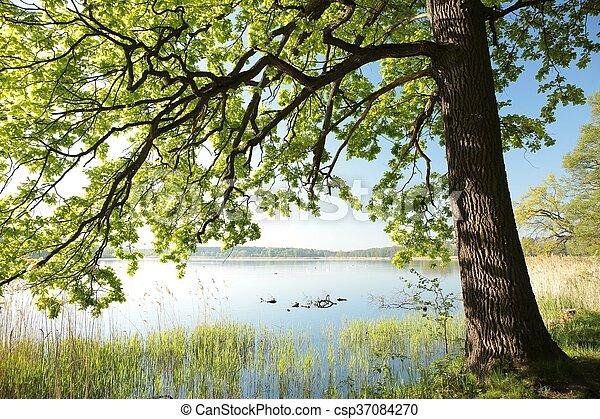 primavera, alba, paesaggio - csp37084270