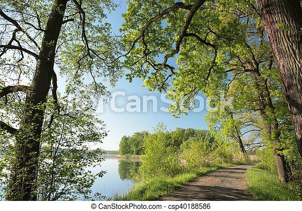 primavera, alba, paesaggio - csp40188586