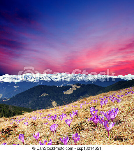 Primavera - csp13214651