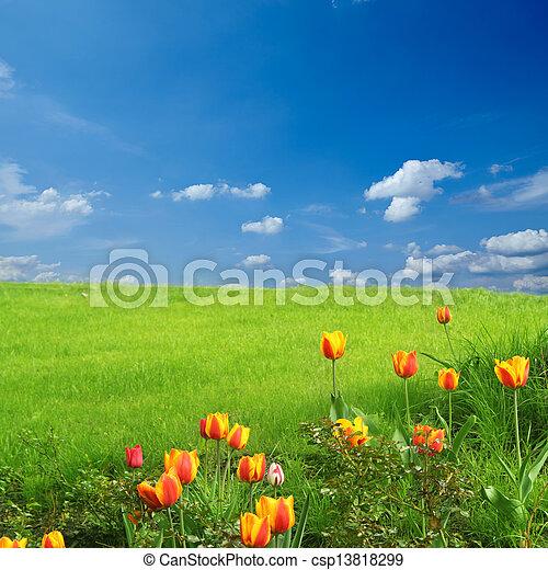 primavera - csp13818299