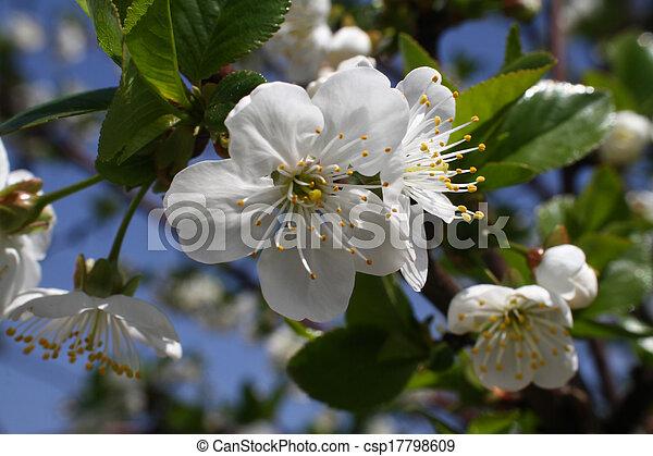 primavera - csp17798609