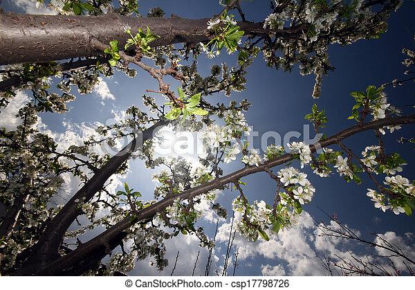 primavera - csp17798726