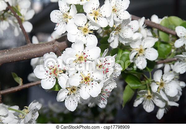 primavera - csp17798909