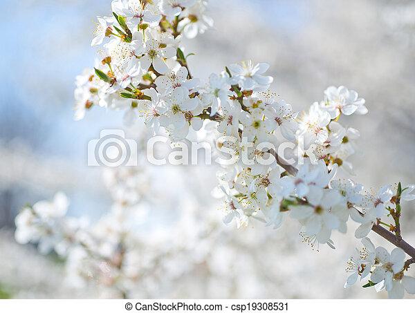 primavera - csp19308531