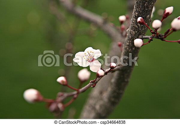 primavera - csp34664838