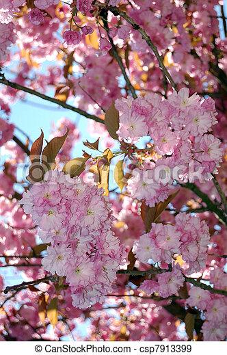 primavera - csp7913399