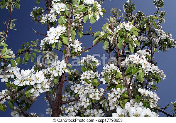 primavera - csp17798653