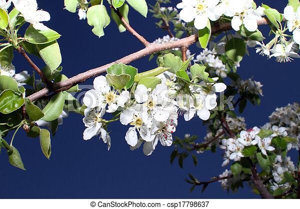 primavera - csp17798637