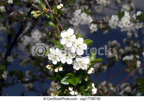 primavera - csp17798740