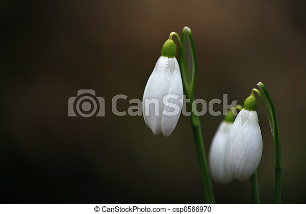 primavera - csp0566970