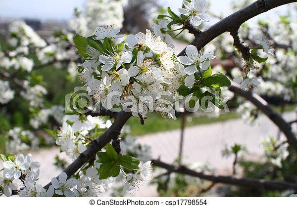 primavera - csp17798554