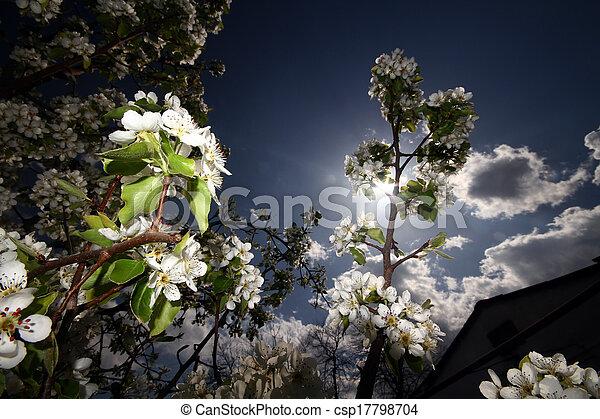 primavera - csp17798704