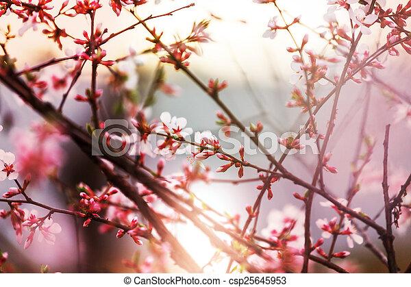 primavera - csp25645953