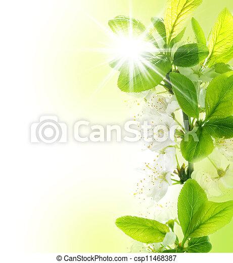 primavera, borda - csp11468387