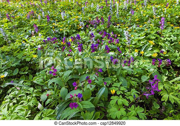 Bosque en primavera - csp12849920