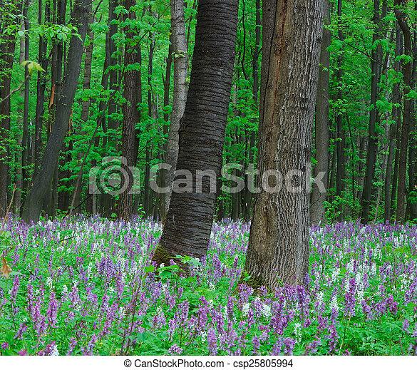 La primavera en el bosque - csp25805994