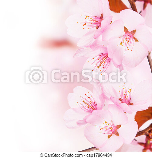 primavera, conceito - csp17964434